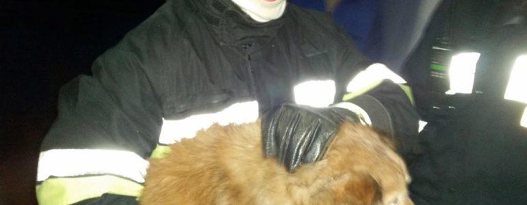 Strażacy uratowali psa, który utknął w stawie – FOTO