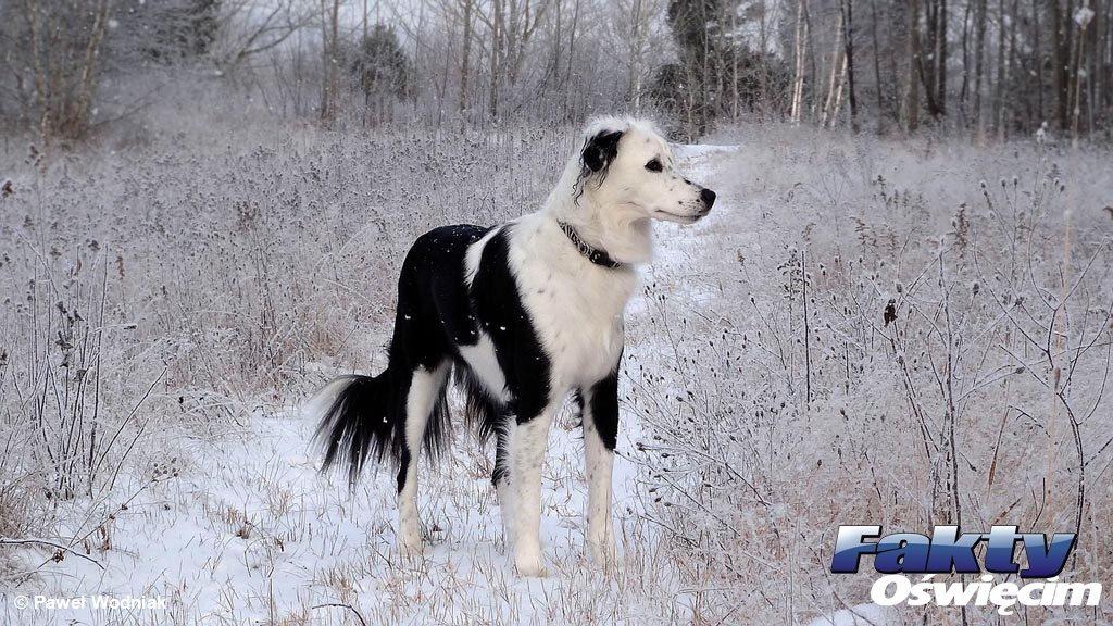 Brzeszcze, mróz, pies, działka, zimno
