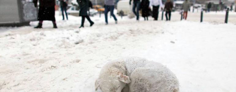 Zadbaj o zwierzęta w czasie mrozów