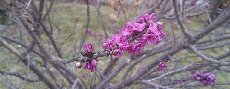 Wiosna w Oświęcimiu – FOTO