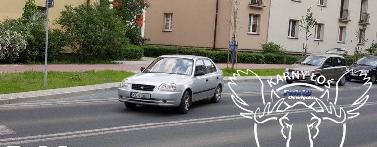 Łoś na środku drogi – FILM, FOTO