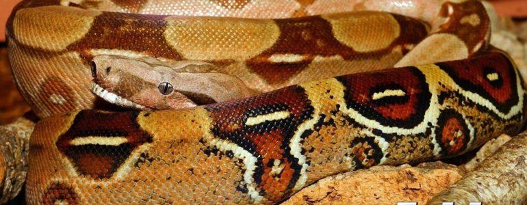 Poszukiwania węża boa w Wilczkowicach