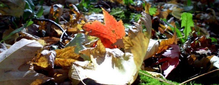 Jesiennie w Oświęcimiu – FOTO