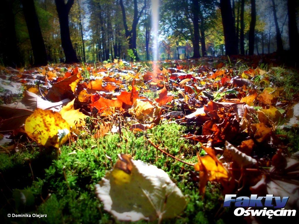 Po deszczowej, a miejscami nawet śnieżnej nocy, przyjdzie stosunkowo ciepły i pogodny jesienny dzień.