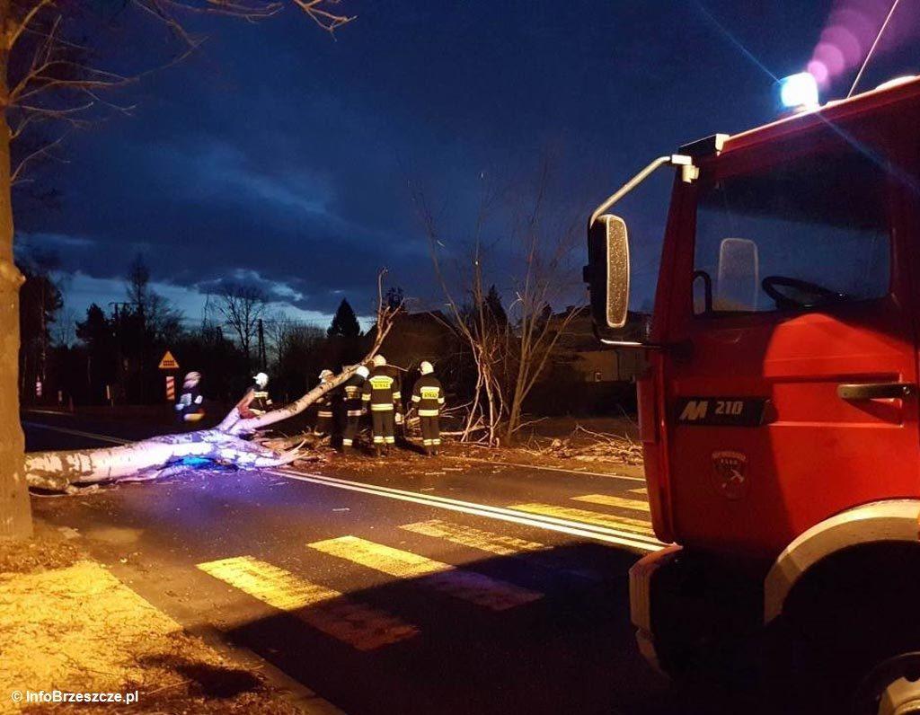 Strażacy ochotnicy i zawodowi 10 razy interweniowali dzisiaj do godz. 19.30 w związku z silnym wiatrem. W Kętach drzewo spadło na samochód z dwójką ludzi.