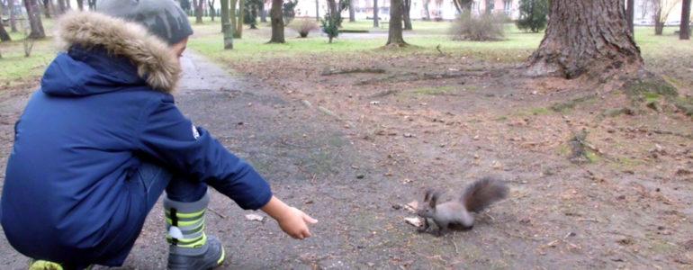 Zabawa z wiewiórką – FOTO