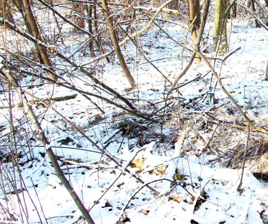 Nieznany sprawca założył wnyki w lesie biegnącym przy ulicy Leśnej w sołectwie Las. Teraz policja szuka kłusownika.