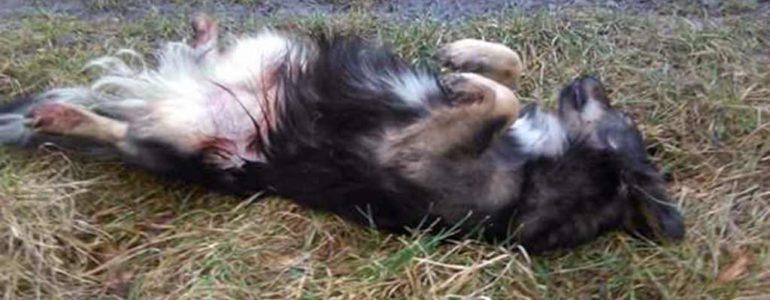 Zastrzelił psa z wiatrówki