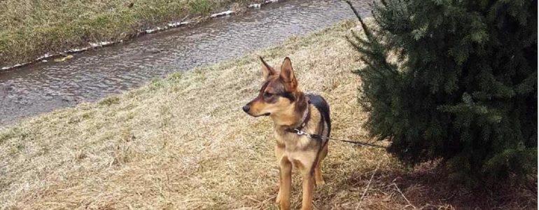 Psia interwencja policjantów z drogówki