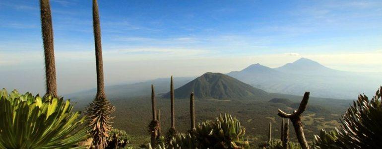 W drodze na najwyższe szczyty Afryki