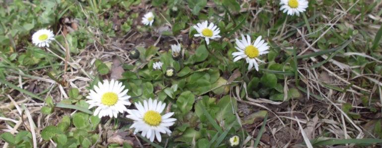 Wiosenny wtorek w obiektywie – FOTO