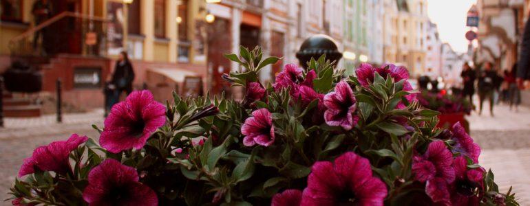 Korzyści z upiększania ulic miasta kwiatami