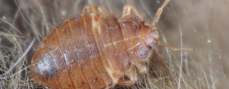 Walczą z pluskwami, karaluchami, gryzoniami – FOTO