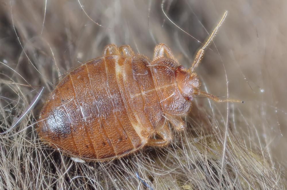 DDD Insekt