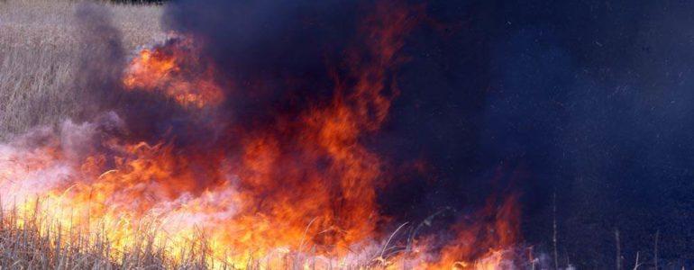 Pożar w lesie w Bobrku