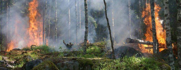 Pali się las w Bobrku