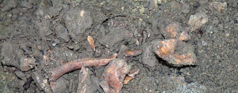 Odkopali ludzkie kości