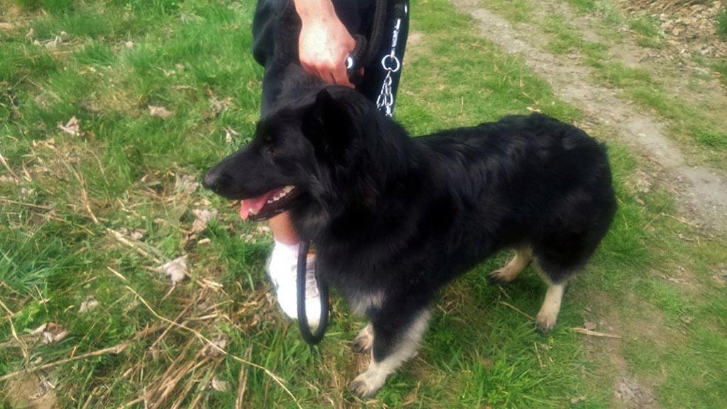 Grojec, Oświęcim, zakopał psa, zakopany pies, Animals, policjanci
