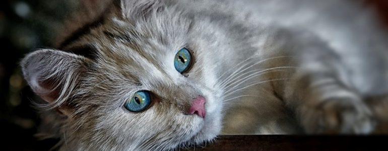 Koci nawigatorzy