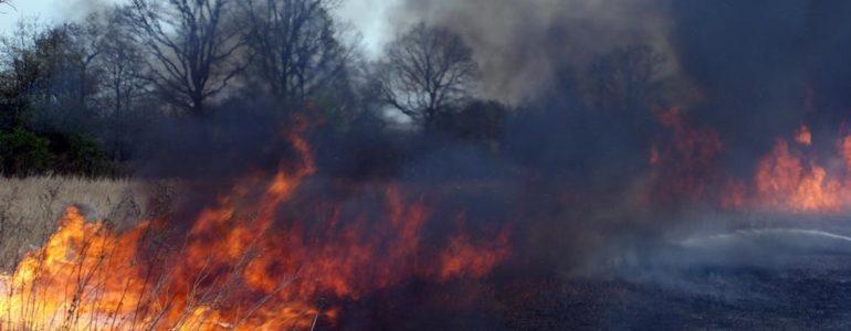 Podpalacz trawy zatrzymany dzięki mieszkańcowi Kęt
