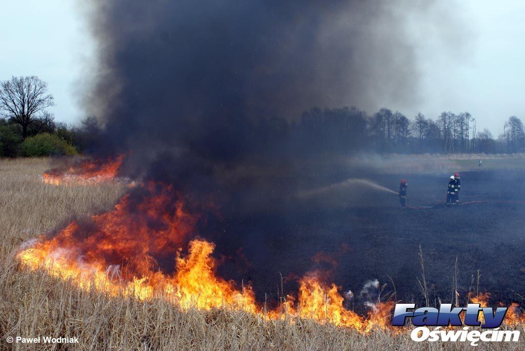 Oświęcim, trawy, pożary traw, podpalacz, piroman, wypalanie