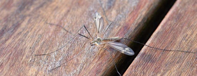 Komary dają się we znaki. W Oświęcimiu wkrótce znikną