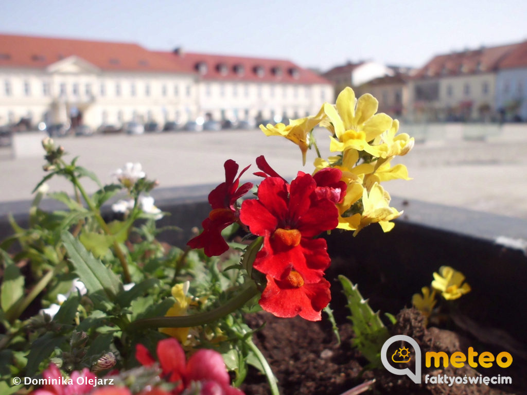 Wiosenne, kwieciste zdjęcia przesłała do eFO Dominika Olejarz. Zapraszamy do oglądania i przesyłania swoich zdjęć.