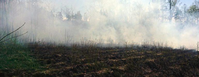 Dwaj dziesięciolatkowie podpalili las – FOTO