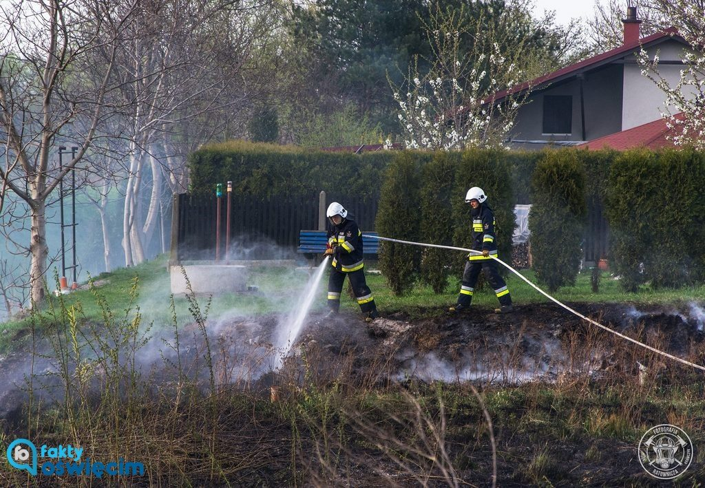 W ciągu pięciu dni na 43 pożary w powiecie oświęcimskim tylko cztery nie dotyczyły traw. Gaszenie głupoty zajmuje teraz strażakom najwięcej czasu.