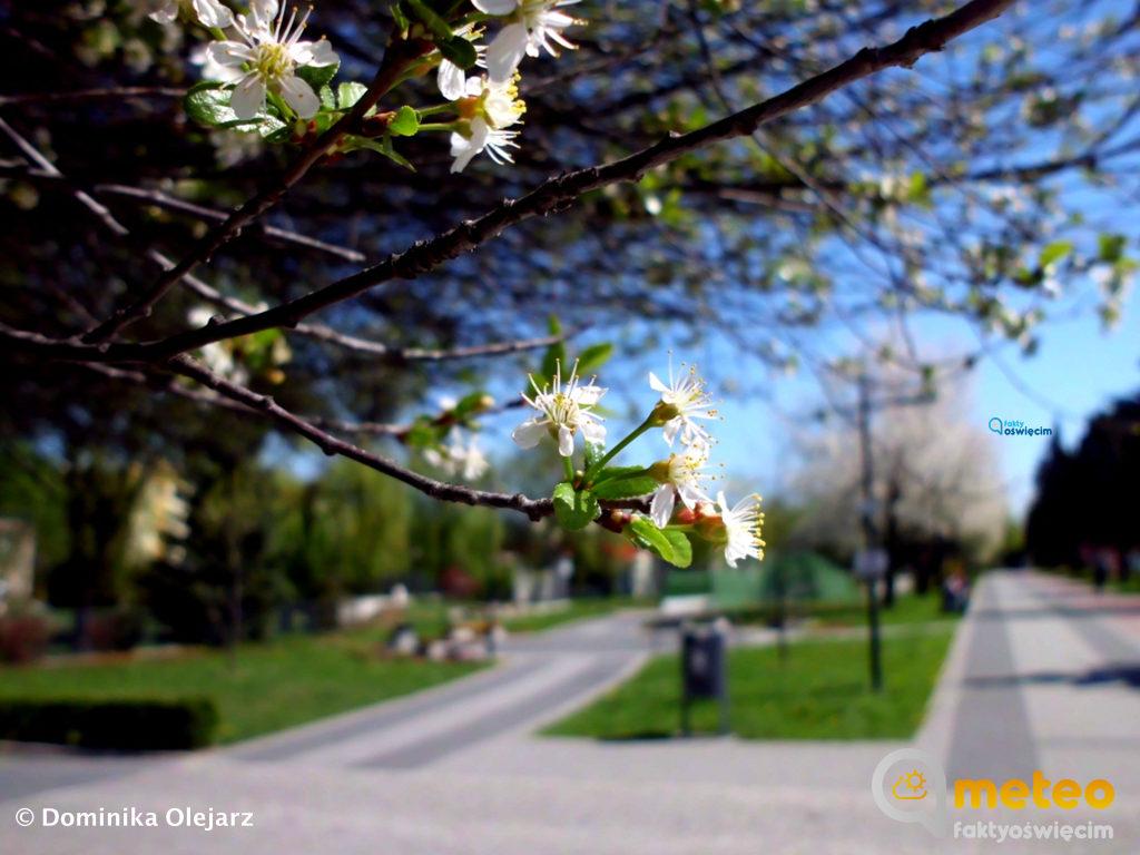 Za oknem słonecznie, ciepło, wokół wszystko kwitnie. Na zdjęciach naturę uchwyciła Dominika Olejarz.