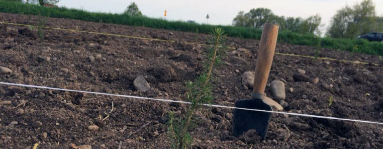 Walczy ze smogiem sadząc drzewa – FOTO