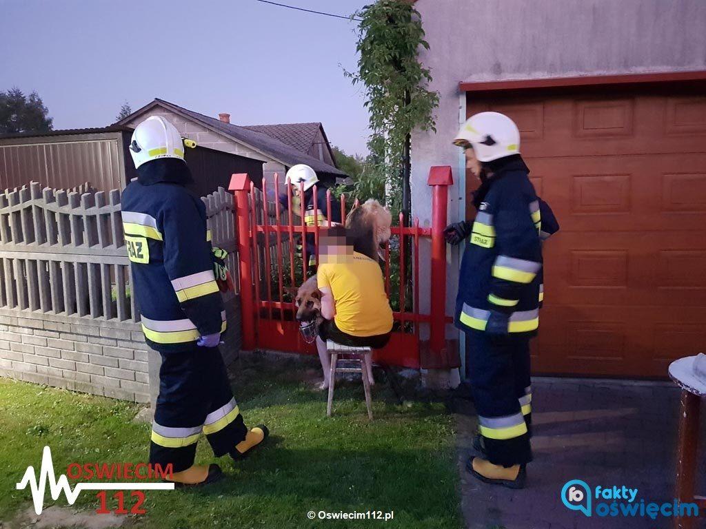 Wczoraj wieczorem w Polance Wielkiej strażacy ruszyli na pomoc psu, który nabił się na metalowe ogrodzenie. Akcja zakończyła się pomyślnie.