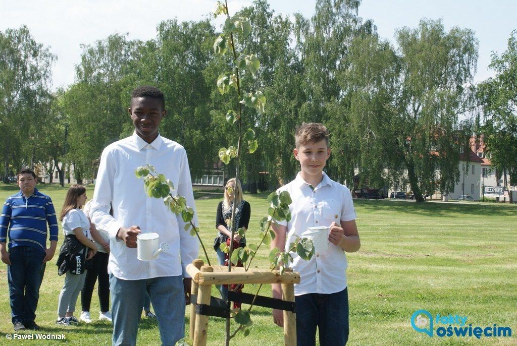 W Alei Drzew Pamięci w Oświęcimiu stanęła lipa z Dachau. To drugie drzewo - symbol, zasadzone w parku na osiedlu Zasole.