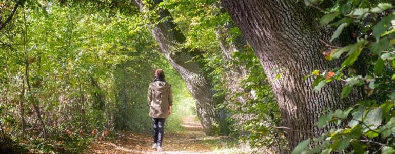 Wycieczka do lasu – na co trzeba uważać?