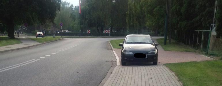 Łoś na chodniku