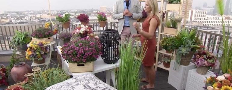 Co jesienią posadzić na balkonie? – FILM