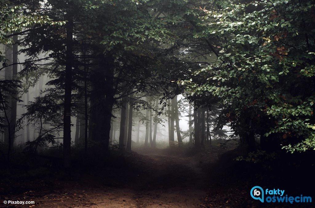 Dwie młode kobiety zabłądziły w lesie. Na pomoc ruszyli policjanci, którzy odnaleźli zaginione w kompleksie leśnym pomiędzy Chełmkiem a Jaworznem.