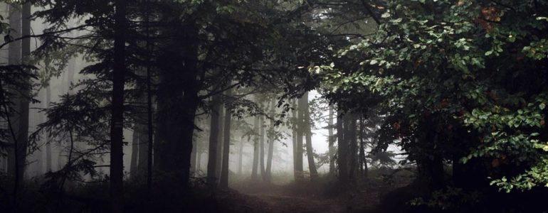 Zapadał zmrok, a kobiety zabłądziły w lesie