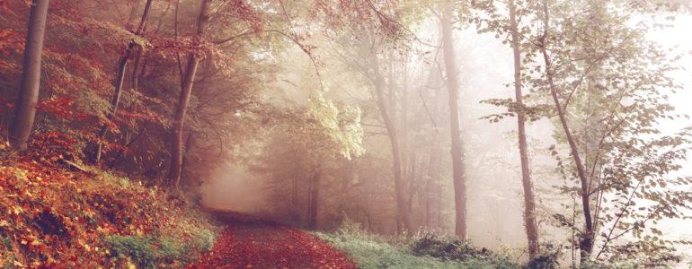 Jak wygląda jesień?