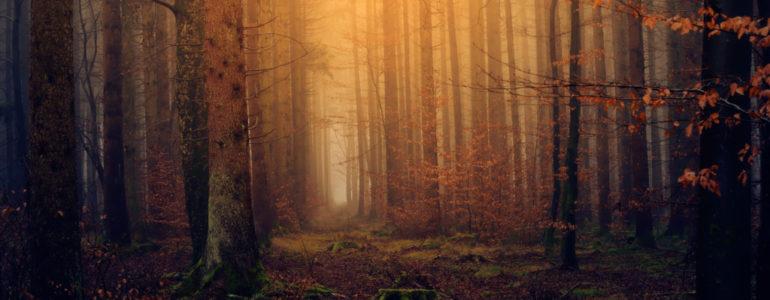 Zaginiona 60-latka odnaleziona w lesie