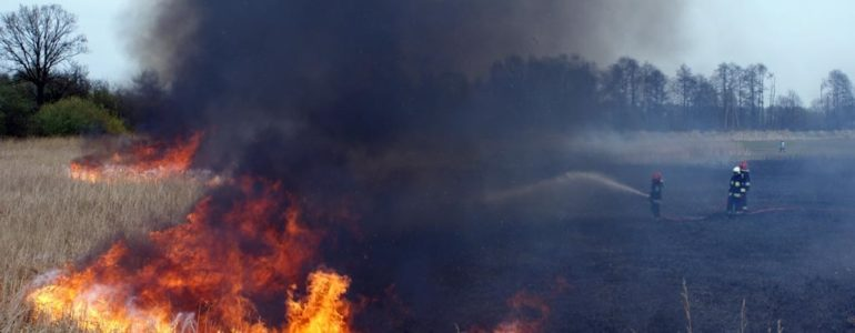Rozpoczęło się wypalanie traw