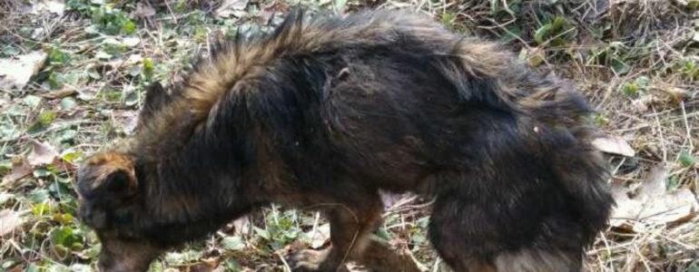 Znaleźli wychudzonego psa. Szukają mu nowego domu – FOTO