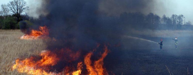 Ponad połowa pożarów, to trawy