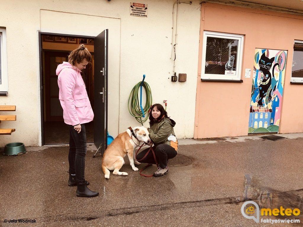 Oświęcimskie schronisko dla bezdomnych zwierząt jest zagrożone w związku z sytuacja powodziową. Aktualnie mieszka w nim kilkadziesiąt psów i kotów.