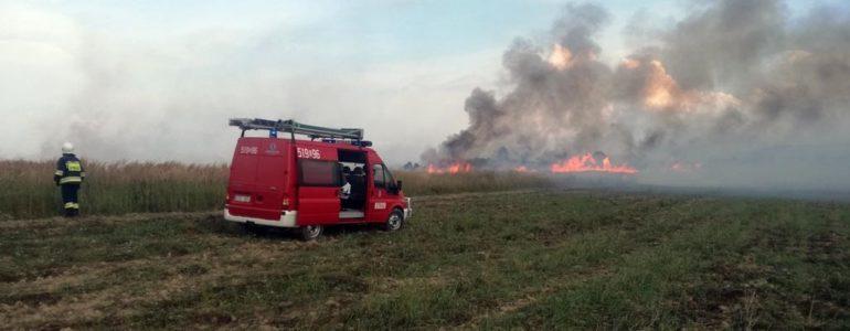 Ogień strawił hektar zboża – FOTO
