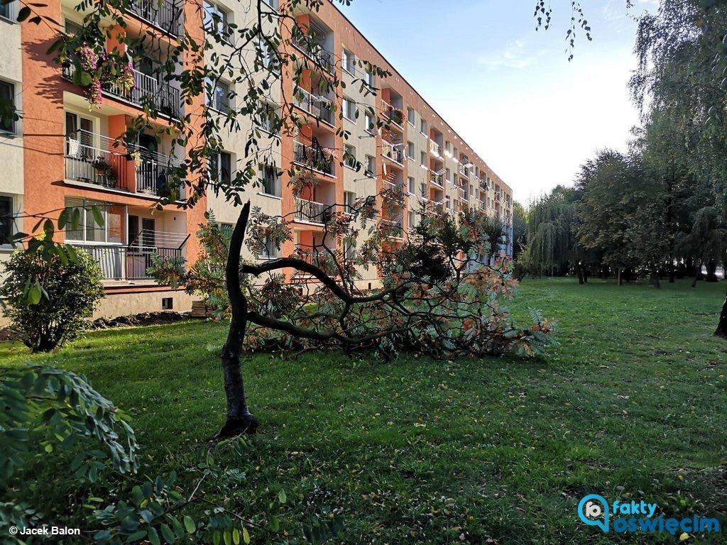 23 razy wyjeżdżali wczoraj strażacy do szkód spowodowanych silnym wiatrem. Większość zgłoszeń dotyczyła uszkodzonych, złamanych i powalonych drzew.