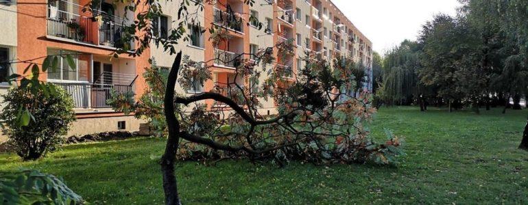 Strażacy wyjeżdżali głównie do połamanych drzew