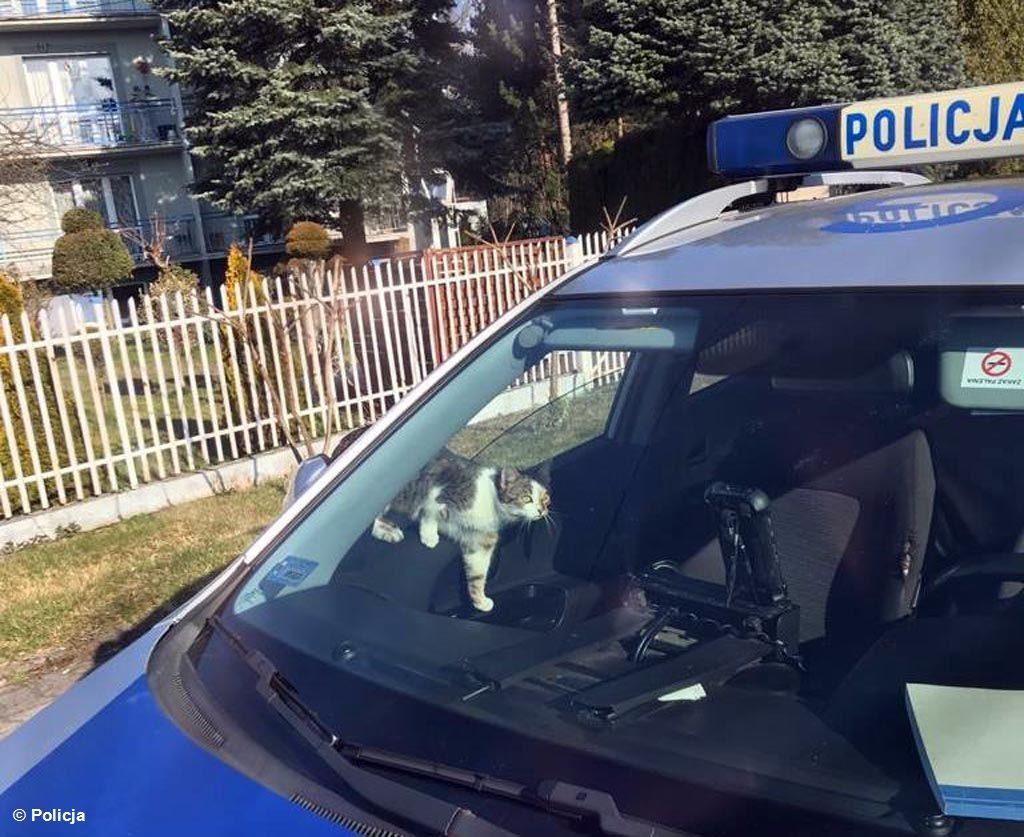 Dostrzegł patrol drogówki na służbie. Postanowił go skontrolować. Nie, nie wyższy rangą policjant z oświęcimskiej komendy, ale kociak z sąsiedztwa.