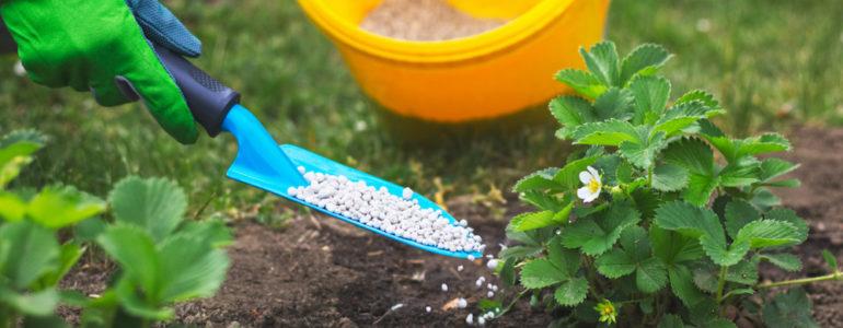 Sprawdzone nawozy do roślin
