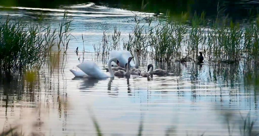 Zachęcamy do obejrzenia filmu ukazującego obszar chroniony Natura 2000 w Brzeszczach Nazieleńcach. To doskonałe miejsce na wypoczynek na łonie natury.